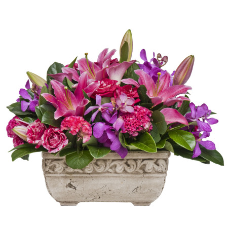 Hot Pink & Purple Premium Pot
